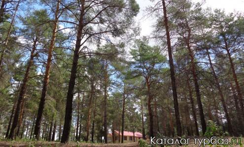 Сосновый лес на территории турбазы